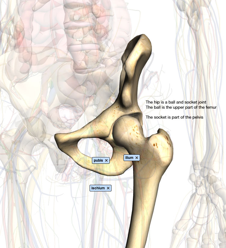 Monterey Spine And Joint Dr Gollogly Dr Meckel Dr Lin Hip