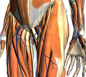 hip fracture patterns